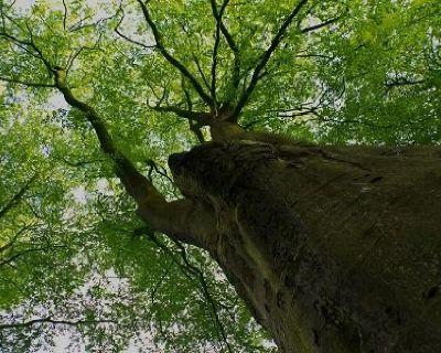 Tree Service Pros of Rio Rancho