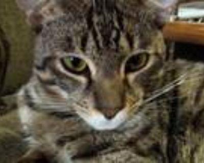 Male F5 Savannah Kitten