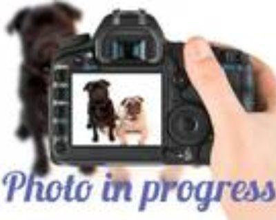 Adopt MOMMA a Black Labrador Retriever / Mixed dog in Denver, CO (31960988)