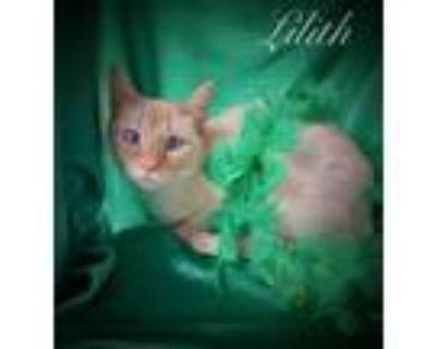 Adopt Lilith a Siamese