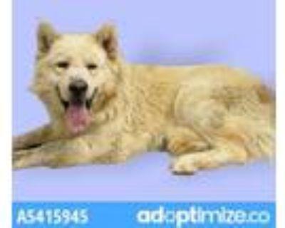 Adopt JAMES a German Shepherd Dog, Siberian Husky