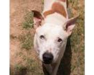 Spud, Terrier (unknown Type, Medium) For Adoption In Shreveport, Louisiana