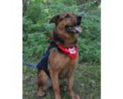 Adopt Jade a Rottweiler, German Shepherd Dog