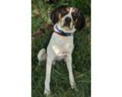 Adopt Boomer a Black Treeing Walker Coonhound / Mixed dog in Clay Center