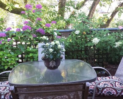Sunny South-Facing fully furnished one bedroom suite with a 10 X 20 Deck - Kitsilano