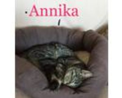 Adopt Annika a Tiger Striped American Shorthair (short coat) cat in Lake Mary