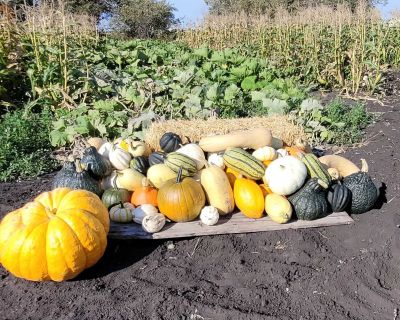 Pumpkins and Winter Squash for Sale