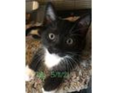 Tally, Domestic Shorthair For Adoption In Riverside, California