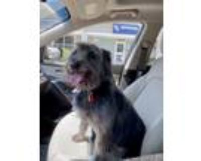 Adopt Duffy a Terrier (Unknown Type, Medium) dog in Windsor, CO (31931463)