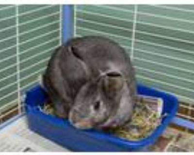 Adopt Uranus a Bunny Rabbit