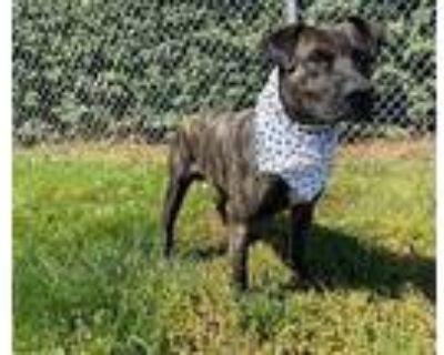 Rocky, Terrier (unknown Type, Medium) For Adoption In Winder, Georgia