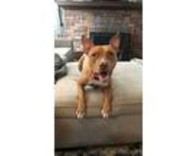 Lizzy, Pit Bull Terrier For Adoption In Northville, Michigan