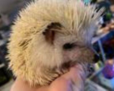 Adopt Ferb a Hedgehog