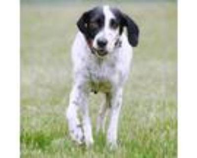 Adopt Masie a Coonhound