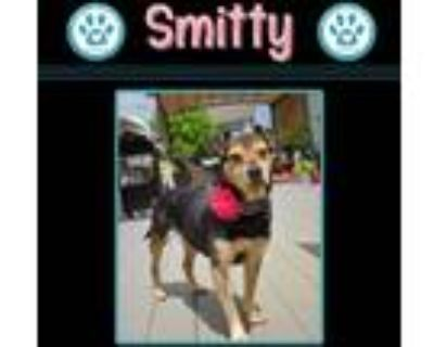 Adopt Smitty 051521 a Black - with Tan, Yellow or Fawn Beagle / Terrier (Unknown