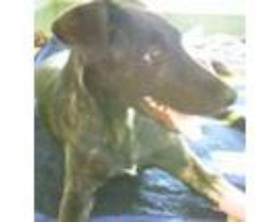 Adopt MARCEL a Labrador Retriever, Mixed Breed