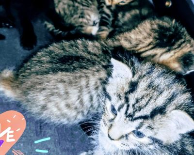 Part Bengal and domestic kittens
