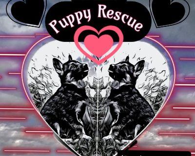 El Paso's Puppy Rescue