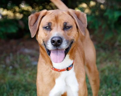 Terrance 10794 - Hound/Mix - Adult Male