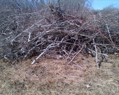 Tree Branches, Twigs, Firewood   Craft