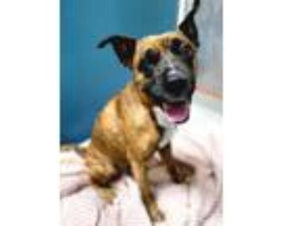 Adopt Lucy 449-21 a Boxer, Mixed Breed