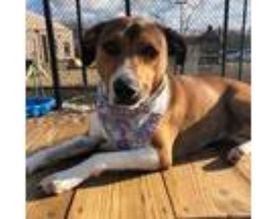Adopt Trixie a Tan/Yellow/Fawn Hound (Unknown Type) / Mixed dog in Chesapeake