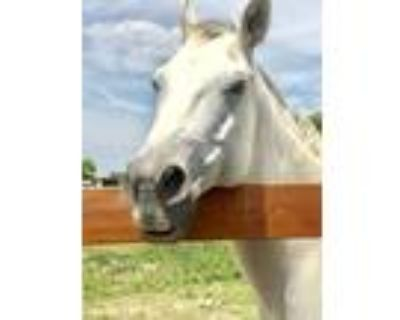 AQHA registered mare and gelding