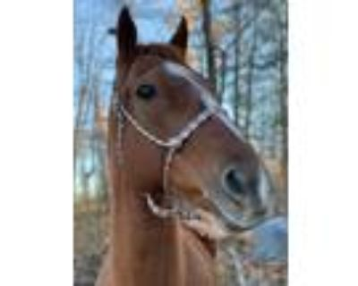 Adopt Easy a Thoroughbred