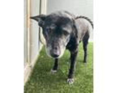 Adopt Ramonda a Mixed Breed (Medium) / Labrador Retriever / Mixed dog in