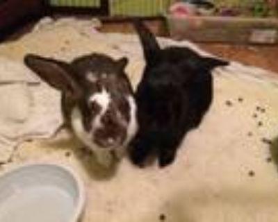 Adopt Al and Dennis a Bunny Rabbit
