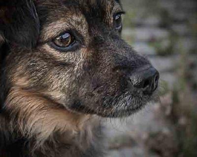 Family Pet Animal Hospital & Veterinary Clinic Longmont