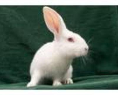 Adopt Rabbit Downey Jr a New Zealand