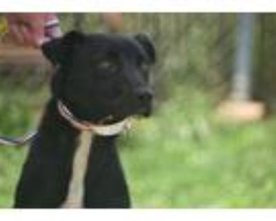 Adopt Maryland a Black Shepherd (Unknown Type) / Mixed dog in Gainesville