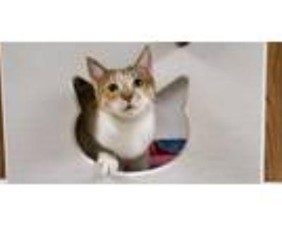 Adopt Kitten 21865 ( Wendy) a Calico (short coat) cat in Parlier, CA (32115914)
