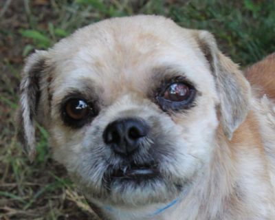 Snoopy P 11375 - Mixed Breed (Small) - Adult Male