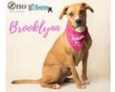 Adopt Brooklynn a Hound, Mixed Breed