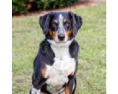 Adopt Wylie 8402 a Hound