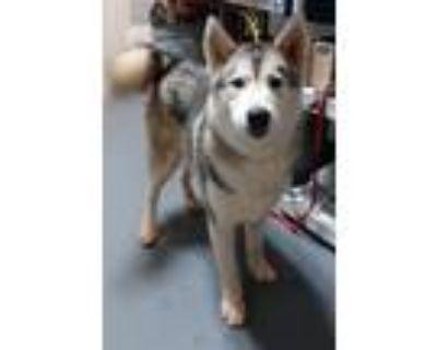 Adopt 21-06-1444b Blade a Husky