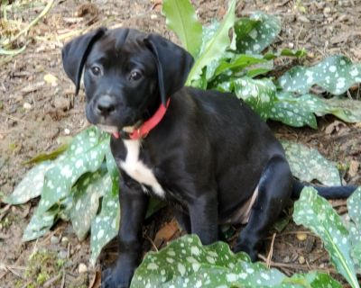 Nora 11153 - Mixed Breed (Medium) - Puppy Female