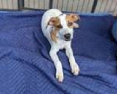 Adopt Bissell