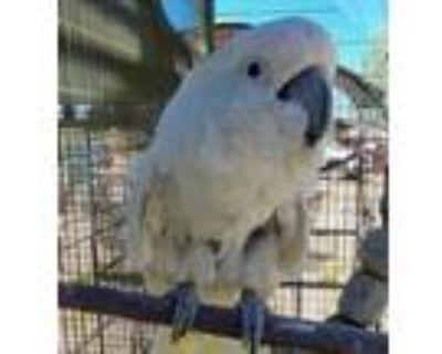 Adopt Fred N a Cockatoo