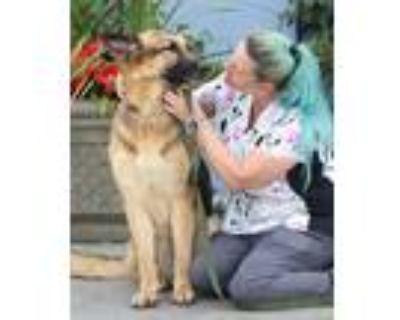 """Adopt Poe von Edgar"""" a German Shepherd Dog"""