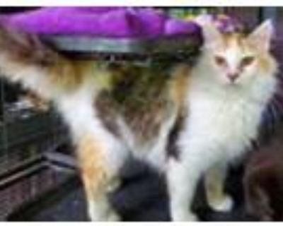 Adopt Junebug and her Kittens a Domestic Shorthair / Mixed cat in Homer Glen