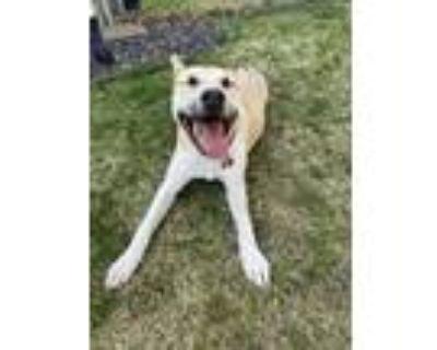 Adopt Nala a Black - with Tan, Yellow or Fawn German Shepherd Dog / Mixed dog in