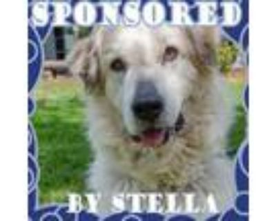 Adopt Willow a White Great Pyrenees / Mixed dog in Salem, OR (31546005)