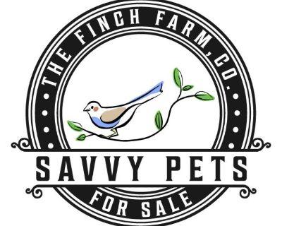 Savvy Pets - The Finch Farm, Co.