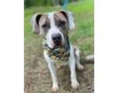 Adopt Ford a Terrier