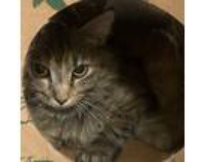 Adopt Olive Leaf a Brown Tabby Domestic Shorthair (short coat) cat in Newport