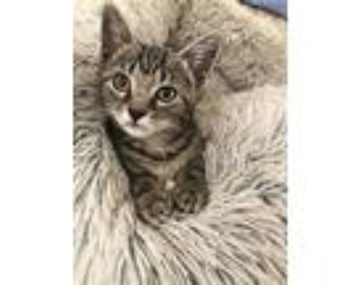 Sweetpea, Domestic Shorthair For Adoption In Los Angeles, California