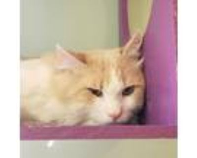Adopt Grover a Tan or Fawn Tabby Domestic Longhair / Mixed cat in Brimfield